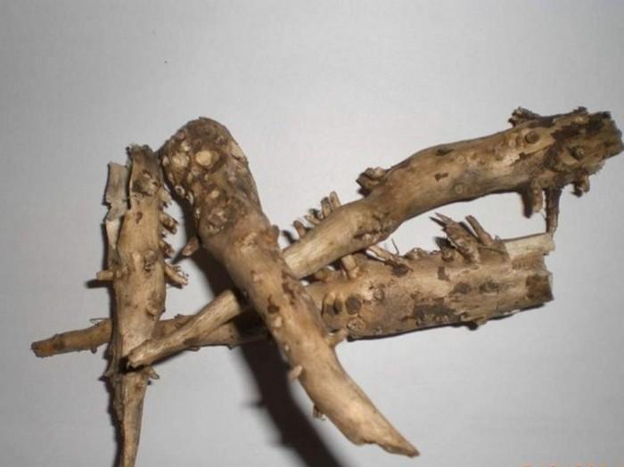 корни подсолнуха от камней в почках рецепт