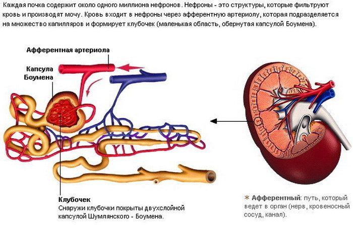 классификация хпн по мочевине