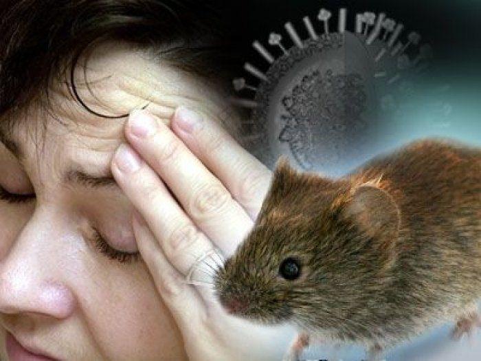 глпс с почечным синдромом