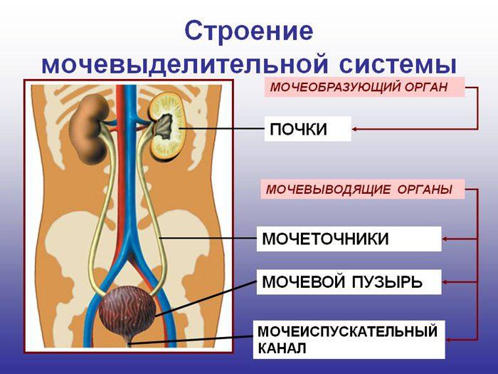 микрогематурия при беременности