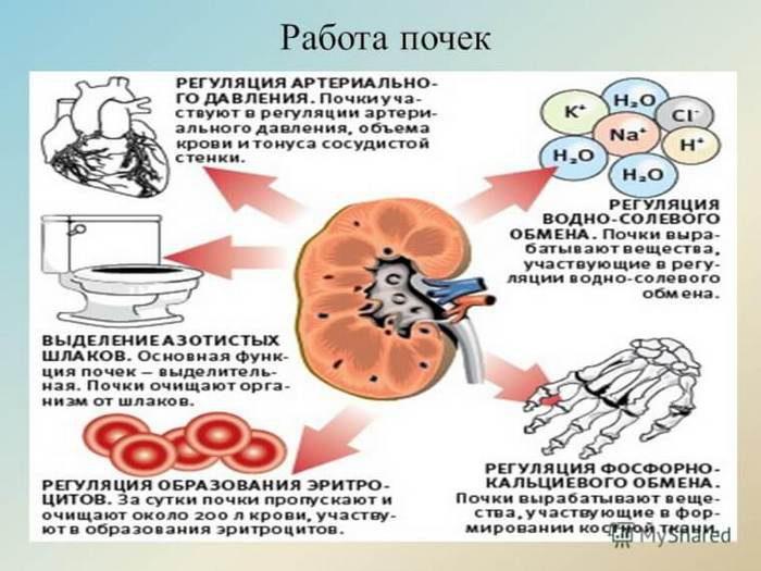 пиелонефрит анализ мочи