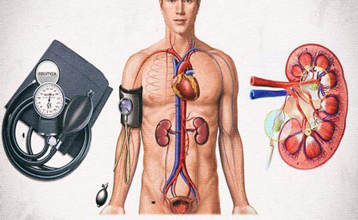 как почки влияют на артериальное давление