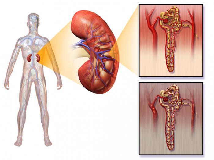 Нижний порог сахара в крови